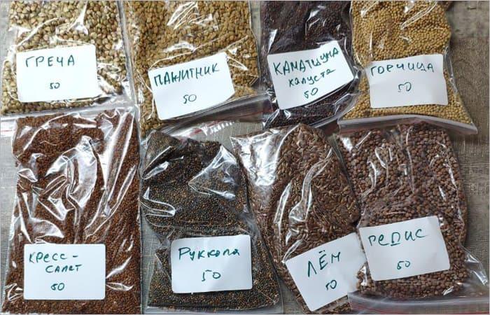 Где купить семена микрозелени
