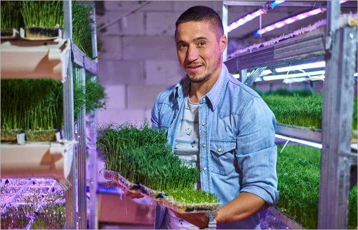 Расчеты в бизнесе по микрозелени
